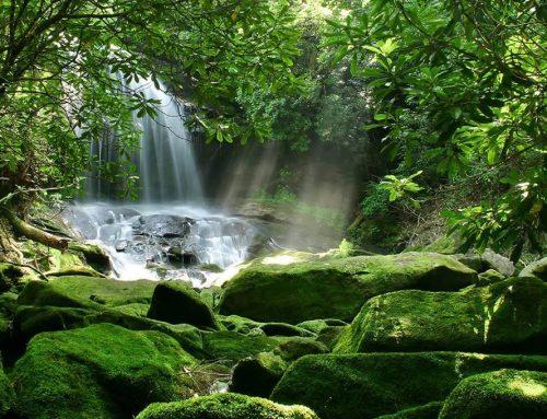 Cantata Les veus de la Natura